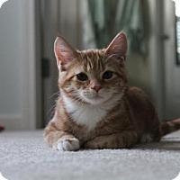 Adopt A Pet :: Jax - Cary, NC