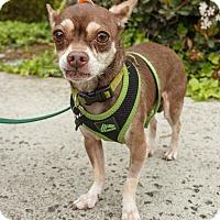 Adopt A Pet :: Bingo - Santa Clara, CA