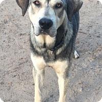 Adopt A Pet :: Herman - Sylacauga, AL