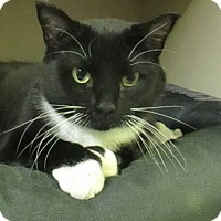 Adopt A Pet :: Holly - Lloydminster, AB