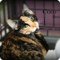 Adopt A Pet :: Coco - Springfield, PA