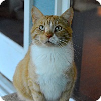 Adopt A Pet :: Charlie Gage - Richmond, VA
