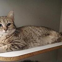 Adopt A Pet :: Harmony - Ashtabula, OH