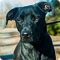 Adopt A Pet :: *Jenny - PENDING - Westport, CT