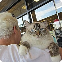 Adopt A Pet :: Carmella - Easley, SC