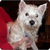 Adopt A Pet :: ABBY - GARRETT, IN