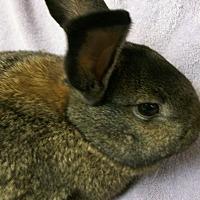 Adopt A Pet :: Cupcake - Harrisburg, PA