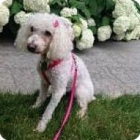 Adopt A Pet :: Mulan - South Amboy, NJ