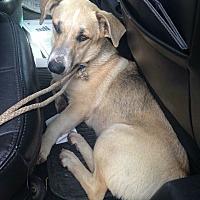 Adopt A Pet :: Nilla - Beeville, TX