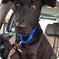 Adopt A Pet :: Dixon D - Torrance, CA
