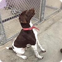 Adopt A Pet :: Blaze - Alma, WI