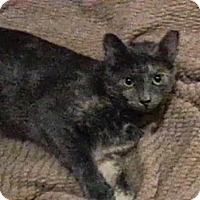 Adopt A Pet :: Babette - Trevose, PA