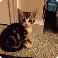 Adopt A Pet :: Lexie - Monroe, GA