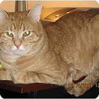 Adopt A Pet :: Heathcliff - Catasauqua, PA