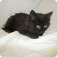 Adopt A Pet :: Blair - Norwich, NY