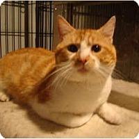 Adopt A Pet :: Buster - Muncie, IN