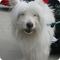 Adopt A Pet :: Tiffany - Canoga Park, CA