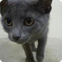 Adopt A Pet :: Minto - Milwaukee, WI