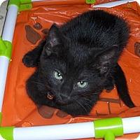 Adopt A Pet :: Rex - Richmond, VA