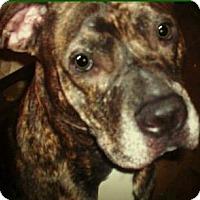 Adopt A Pet :: Fletcher - Dayton, OH