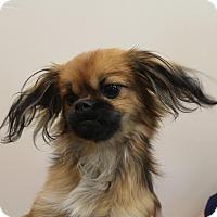 Adopt A Pet :: Nori Boy - Shawnee Mission, KS