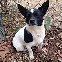 Adopt A Pet :: Gypsy - McDonough, GA