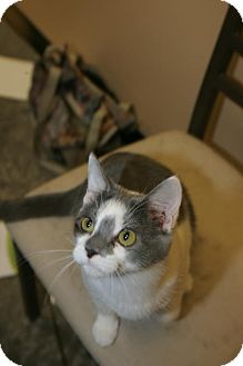Domestic Shorthair Cat for adoption in Capshaw, Alabama - Frenchy Fry