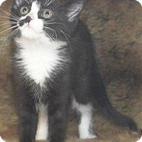 Adopt A Pet :: Trudy - Reston, VA