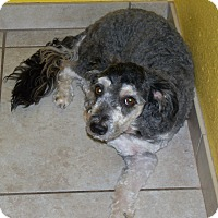 Adopt A Pet :: Harvey - Apache Junction, AZ