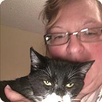 Domestic Shorthair Kitten for adoption in Kingsport, Tennessee - Elsa