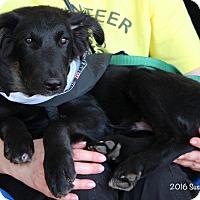 Adopt A Pet :: Benny - Bedford, VA