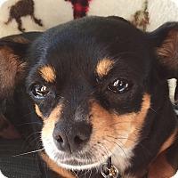 Adopt A Pet :: MADDIE - pasadena, CA