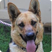 Adopt A Pet :: TAMPA - Red Bluff, CA