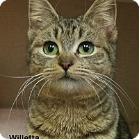 Adopt A Pet :: Willetta - Portland, OR