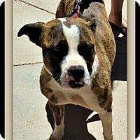 Adopt A Pet :: Natasha - Tombstone, AZ