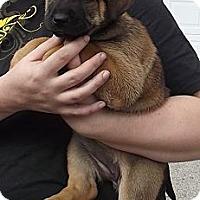 Adopt A Pet :: Bianca - Allentown, PA