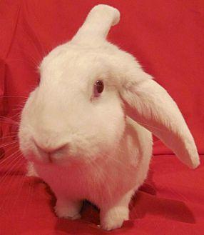 Florida White Mix for adoption in Williston, Florida - Sweetness