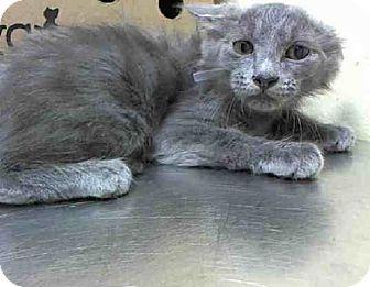 Hairless Cat Adoption Nyc