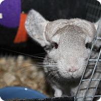 Adopt A Pet :: Anna - Titusville, FL