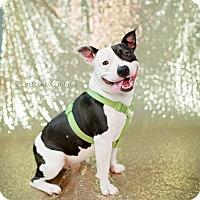 Adopt A Pet :: Ralphie - Muskegon, MI