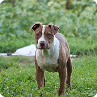 Adopt A Pet :: Nugget - LOCATED IN SANTA CRUZ - cupertino, CA