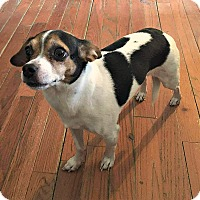 Adopt A Pet :: Jacqueline - Indianapolis, IN