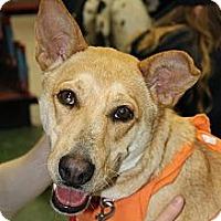 Adopt A Pet :: Allie - Morgantown, WV