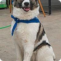 Adopt A Pet :: Mimi - Saskatoon, SK