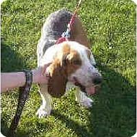 Adopt A Pet :: Dean - Phoenix, AZ