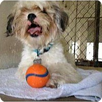 Adopt A Pet :: Mikey - Winter Haven, FL