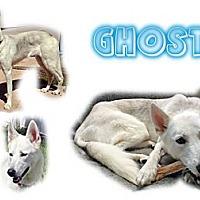 Adopt A Pet :: Ghost - Seminole, FL