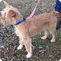 Adopt A Pet :: Jethro - Somers, CT
