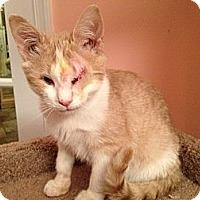 Adopt A Pet :: Turnip - East Hanover, NJ
