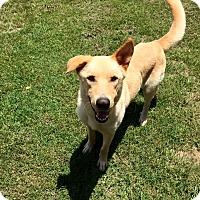 Adopt A Pet :: Tyson - Fort Valley, GA